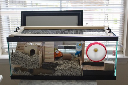 Hamstercaping set up for our hamster