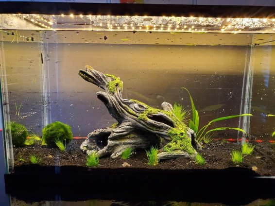 This is the first aquascape tank that Andy built. He added live plants and moss balls.